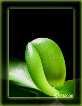 LuCxeed Photography: Birth of Green